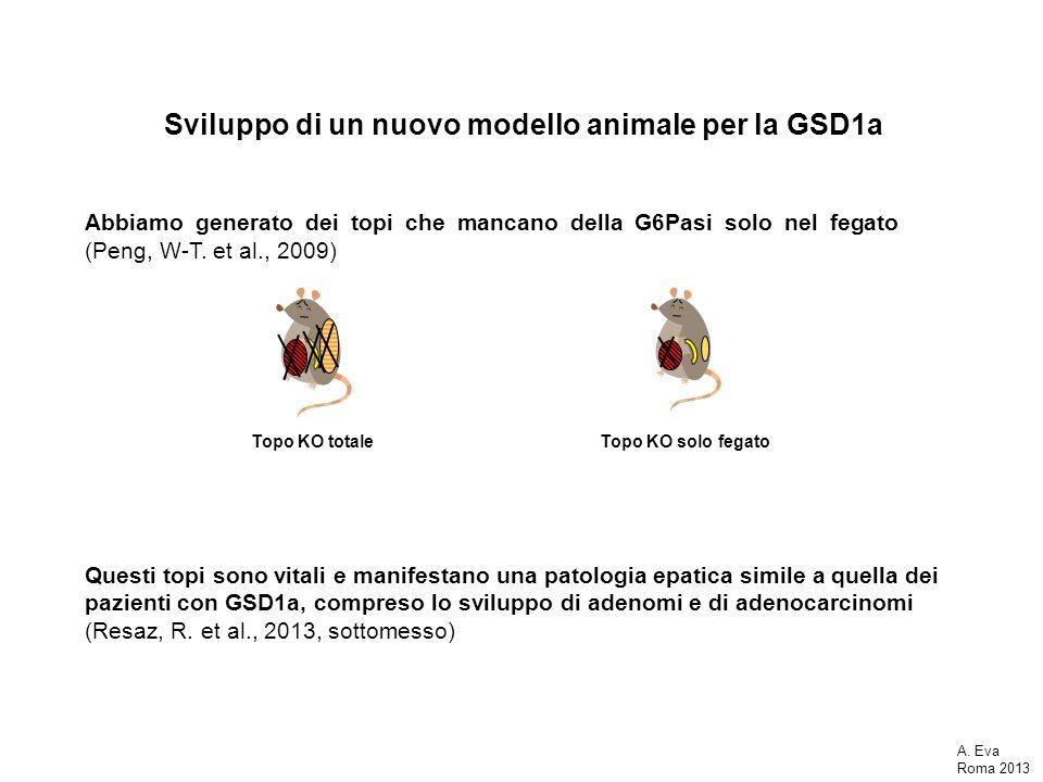 Sviluppo di un nuovo modello animale per la GSD1a Abbiamo generato dei topi che mancano della G6Pasi solo nel fegato (Peng, W-T. et al., 2009) A. Eva