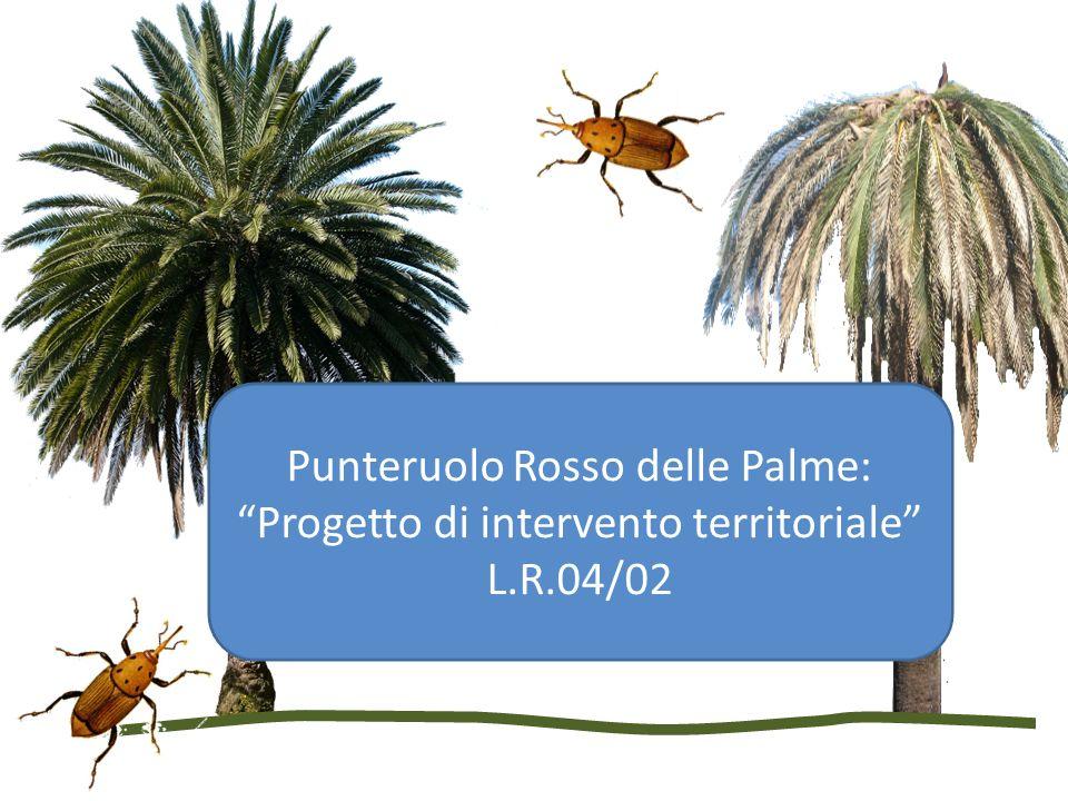 Punteruolo Rosso delle Palme: Progetto di intervento territoriale L.R.04/02