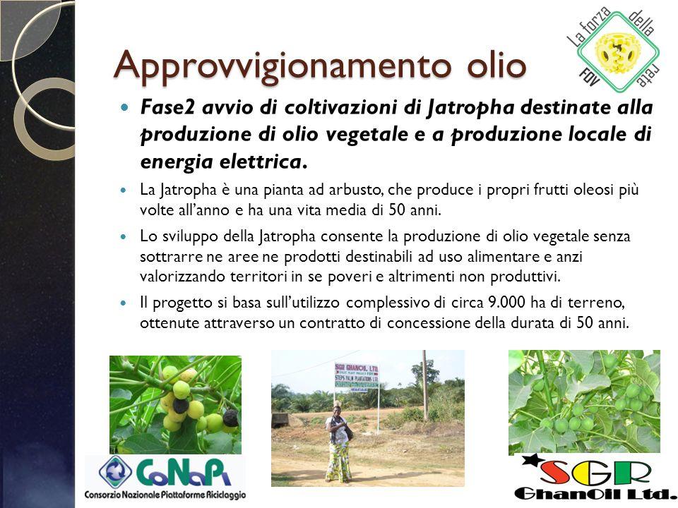 Approvvigionamento olio Fase2 avvio di coltivazioni di Jatropha destinate alla produzione di olio vegetale e a produzione locale di energia elettrica.