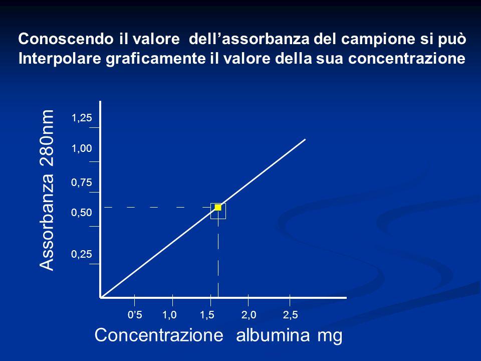 Assorbanza 280nm Concentrazione albumina mg 051,01,5 Conoscendo il valore dellassorbanza del campione si può Interpolare graficamente il valore della