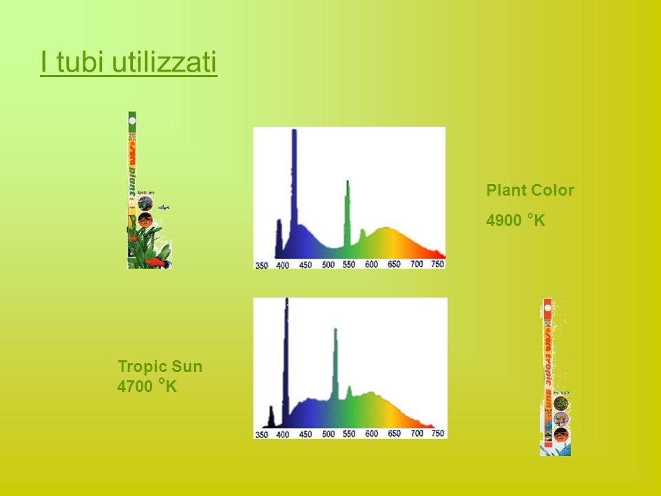 I tubi utilizzati Plant Color 4900 o K Tropic Sun 4700 o K