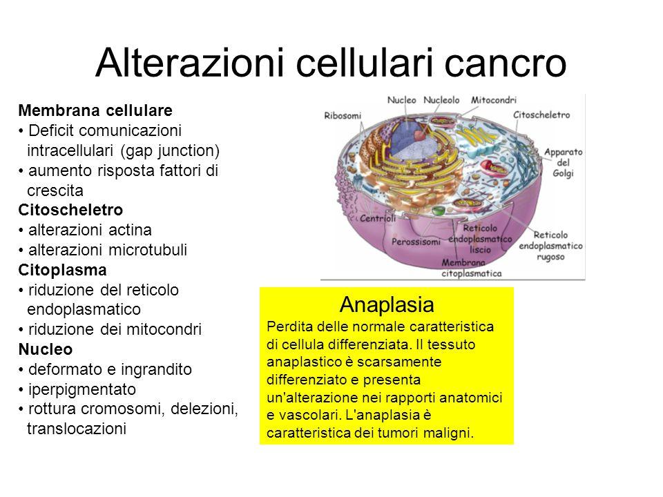 Alterazioni cellulari cancro Membrana cellulare Deficit comunicazioni intracellulari (gap junction) aumento risposta fattori di crescita Citoscheletro