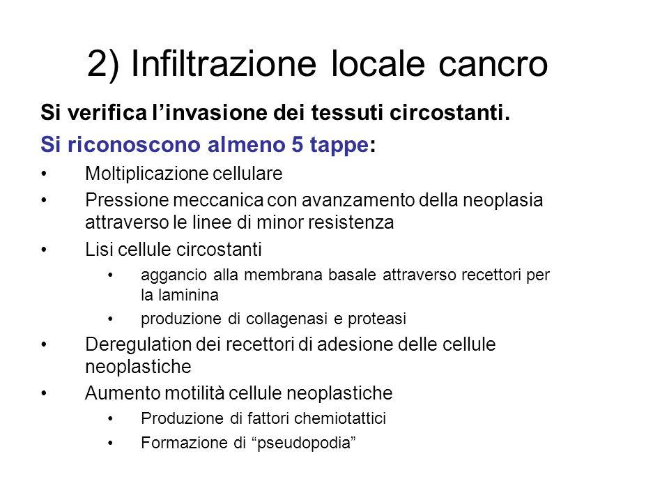 2) Infiltrazione locale cancro Si verifica linvasione dei tessuti circostanti. Si riconoscono almeno 5 tappe: Moltiplicazione cellulare Pressione mecc