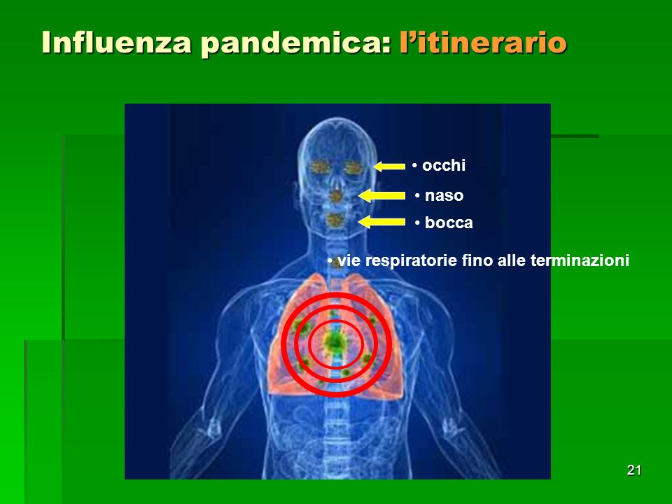 21 Influenza pandemica: litinerario occhi naso bocca vie respiratorie fino alle terminazioni