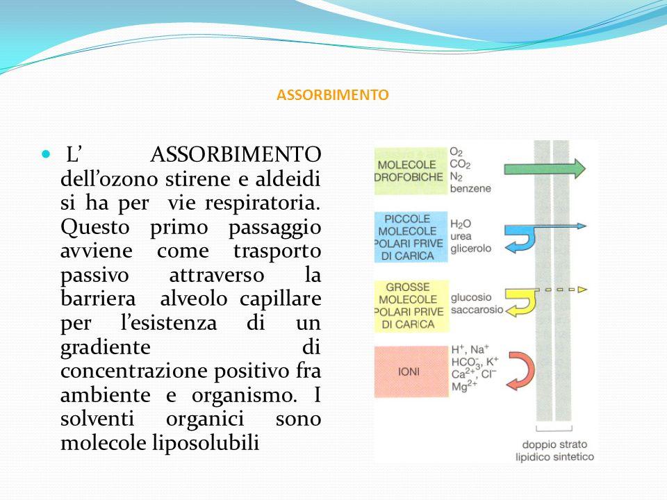 ASSORBIMENTO L ASSORBIMENTO dellozono stirene e aldeidi si ha per vie respiratoria. Questo primo passaggio avviene come trasporto passivo attraverso l