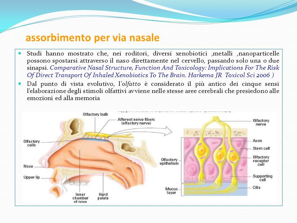 assorbimento per via nasale Studi hanno mostrato che, nei roditori, diversi xenobiotici,metalli,nanoparticelle possono spostarsi attraverso il naso di