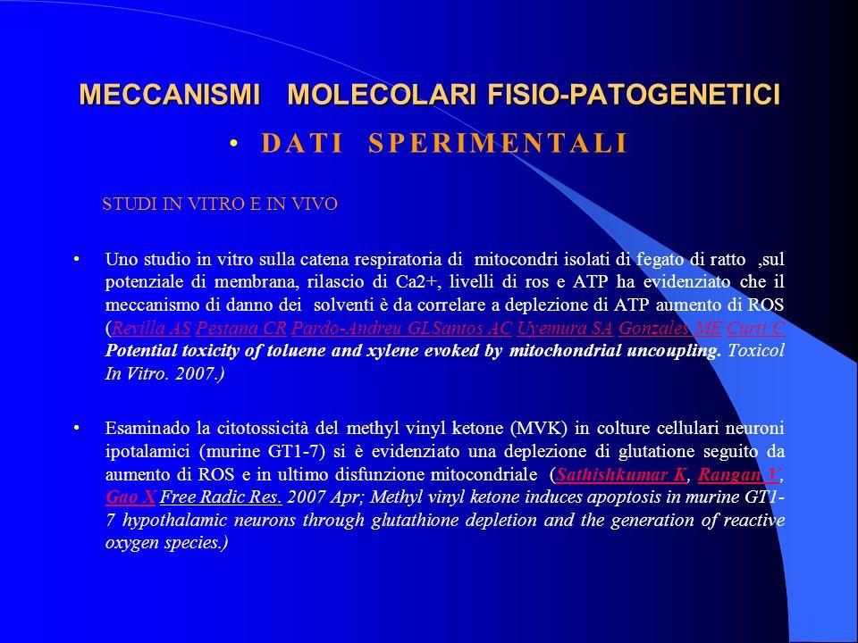 MECCANISMI MOLECOLARI FISIO-PATOGENETICI DATI SPERIMENTALI STUDI IN VITRO E IN VIVO Uno studio in vitro sulla catena respiratoria di mitocondri isolat