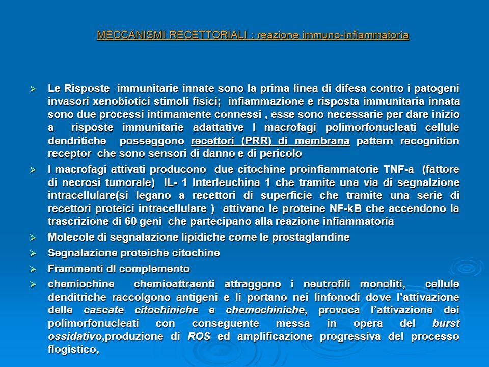 MECCANISMI RECETTORIALI : reazione immuno-infiammatoria Le Risposte immunitarie innate sono la prima linea di difesa contro i patogeni invasori xenobi