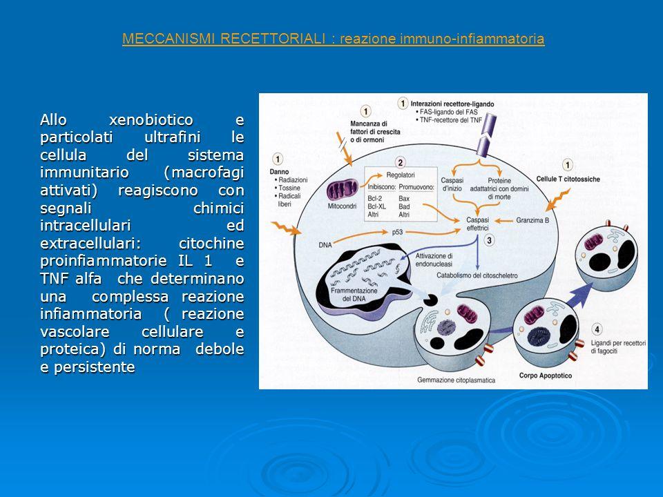 Allo xenobiotico e particolati ultrafini le cellula del sistema immunitario (macrofagi attivati) reagiscono con segnali chimici intracellulari ed extr
