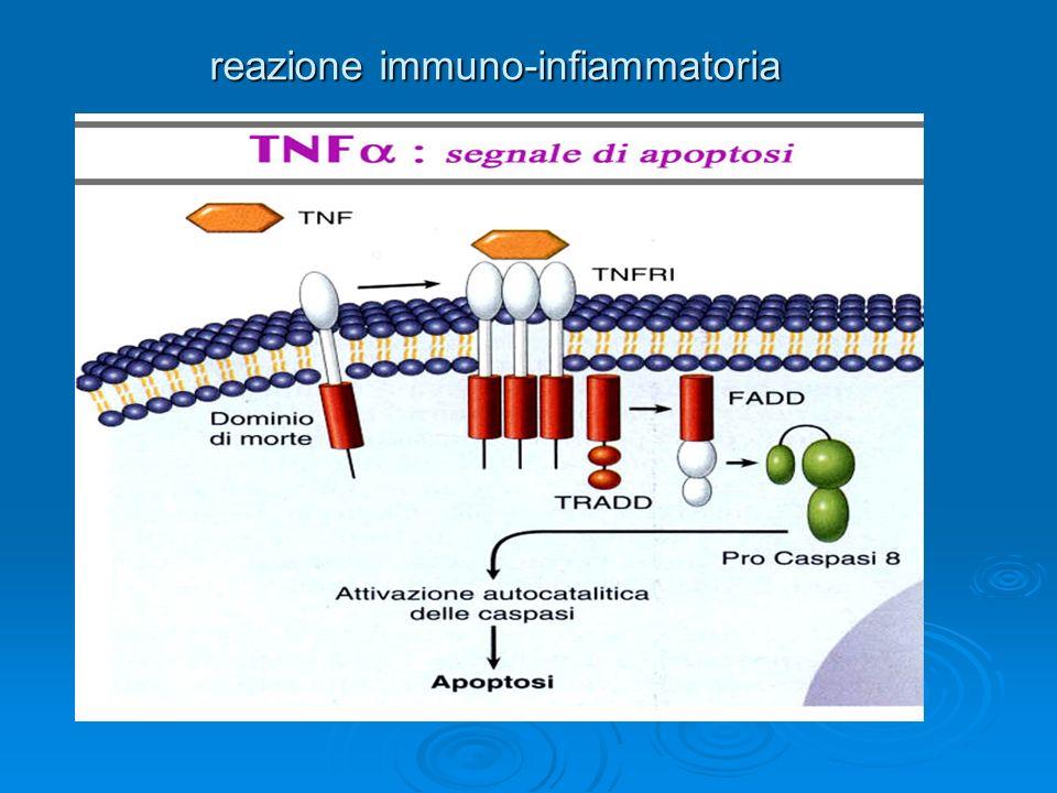 reazione immuno-infiammatoria