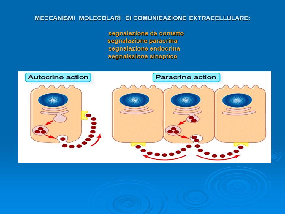 MECCANISMI MOLECOLARI DI COMUNICAZIONE EXTRACELLULARE: segnalazione da contatto segnalazione paracrina segnalazione endocrina segnalazione sinaptica