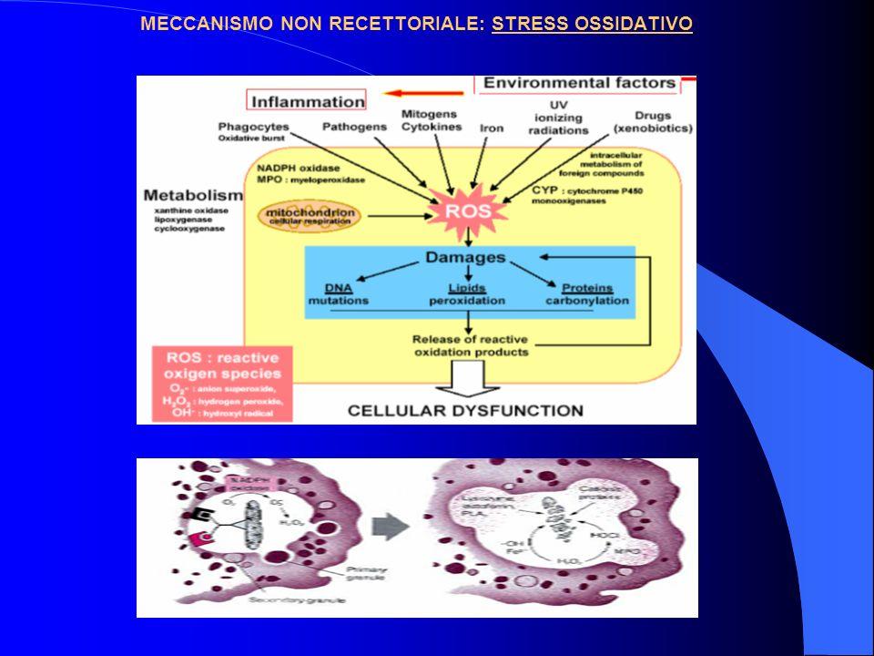 MECCANISMO NON RECETTORIALE: STRESS OSSIDATIVO
