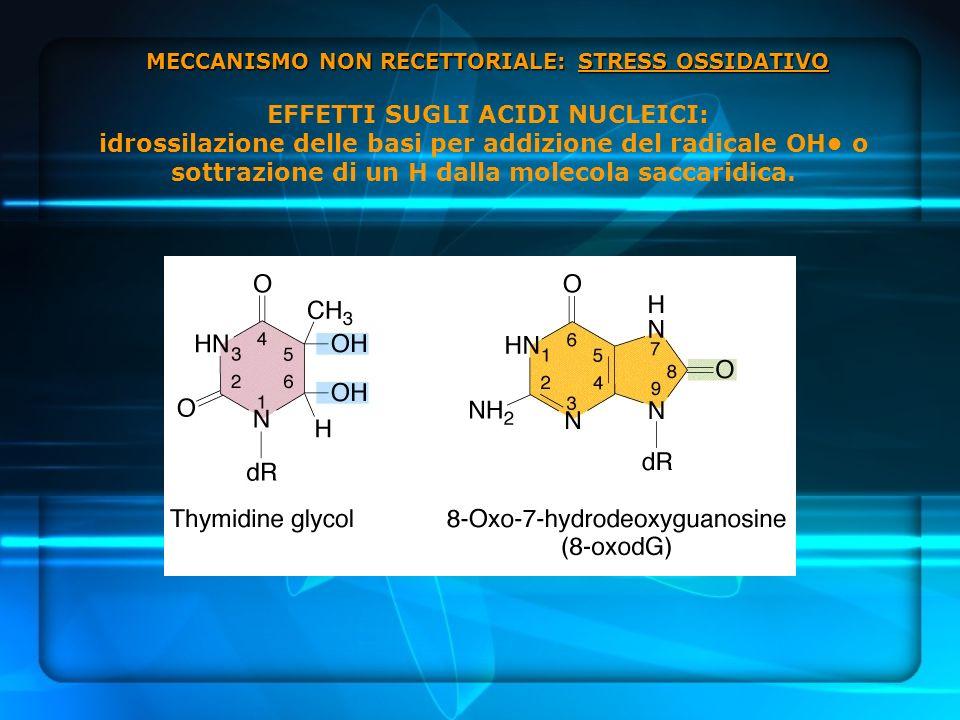MECCANISMO NON RECETTORIALE: STRESS OSSIDATIVO MECCANISMO NON RECETTORIALE: STRESS OSSIDATIVO EFFETTI SUGLI ACIDI NUCLEICI: idrossilazione delle basi