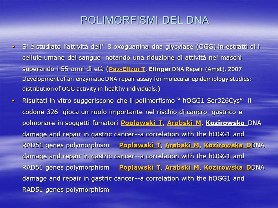 POLIMORFISMI DEL DNA Si è studiato lattività dell 8 oxoguanina dna glycylase (OGG) in estratti di i cellule umane del sangue notando una riduzione di