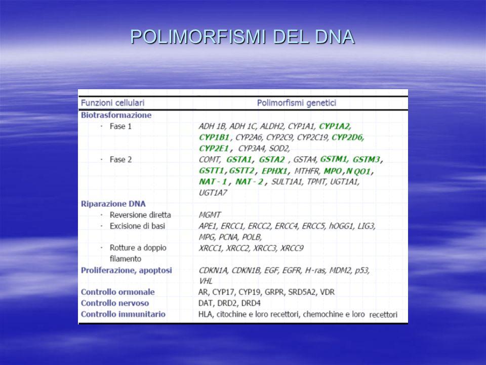 POLIMORFISMI DEL DNA
