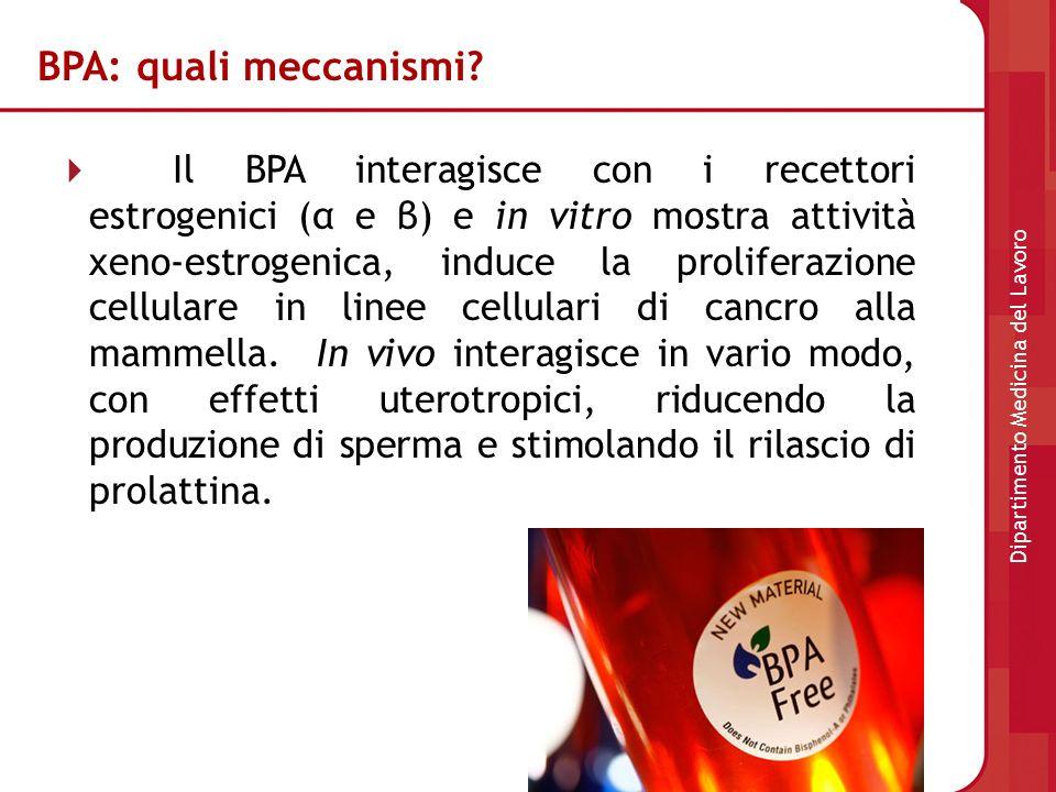 BPA: quali meccanismi? Il BPA interagisce con i recettori estrogenici (α e β) e in vitro mostra attività xeno-estrogenica, induce la proliferazione ce