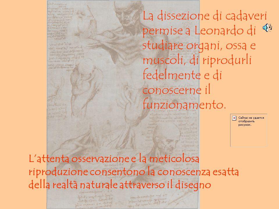 La dissezione di cadaveri permise a Leonardo di studiare organi, ossa e muscoli, di riprodurli fedelmente e di conoscerne il funzionamento. Lattenta o