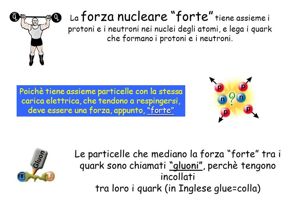 La forza nucleare forte tiene assieme i protoni e i neutroni nei nuclei degli atomi, e lega i quark che formano i protoni e i neutroni. forte Poichè t