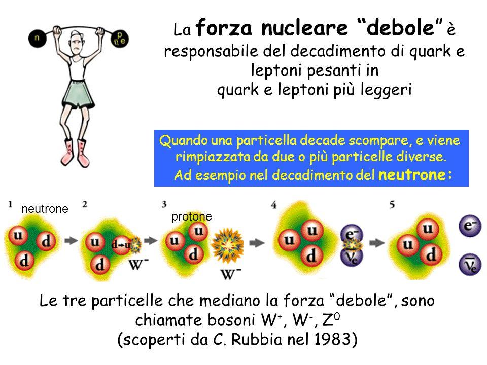 La forza nucleare debole è responsabile del decadimento di quark e leptoni pesanti in quark e leptoni più leggeri Quando una particella decade scompar
