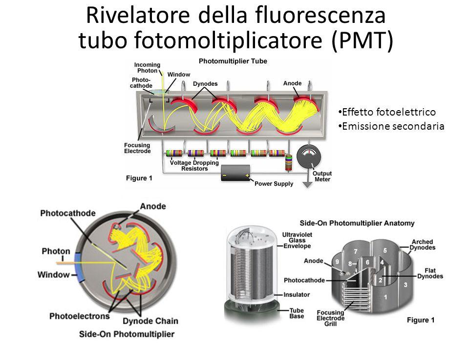 Rivelatore della fluorescenza tubo fotomoltiplicatore (PMT) Effetto fotoelettrico Emissione secondaria