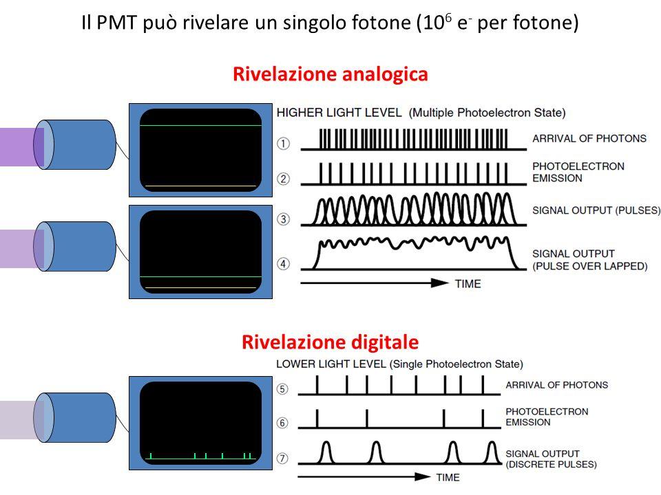Il PMT può rivelare un singolo fotone (10 6 e - per fotone) Rivelazione analogica Rivelazione digitale