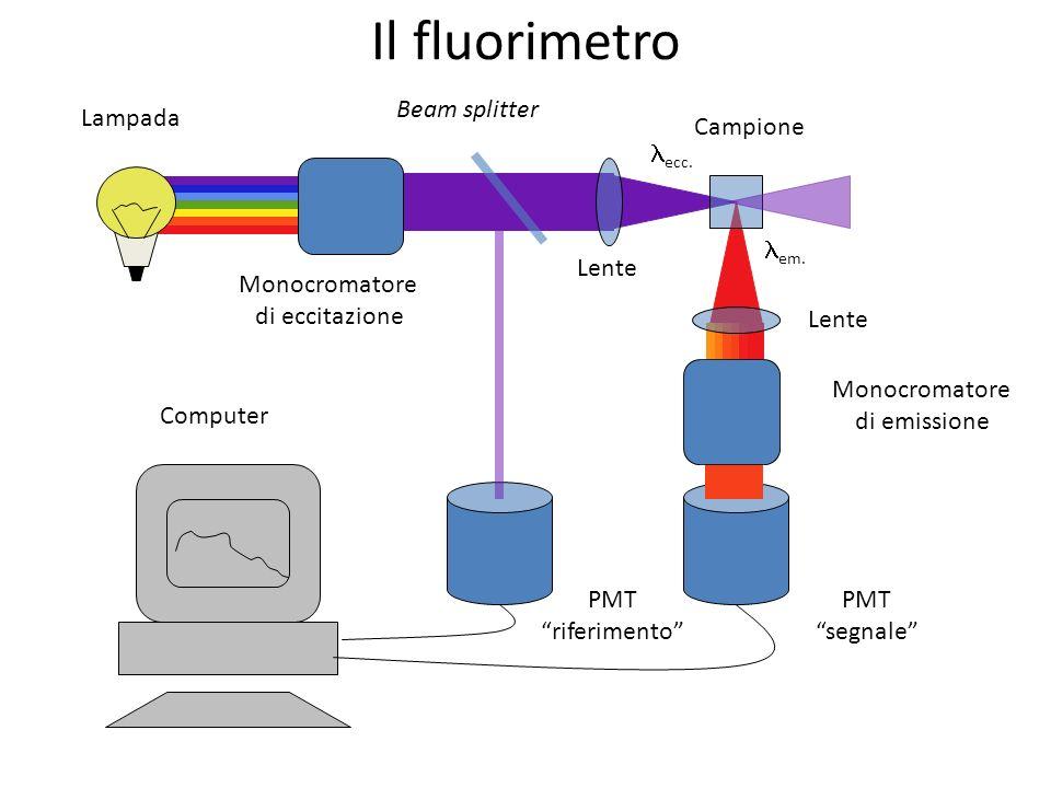 Il fluorimetro Lampada Monocromatore di eccitazione Beam splitter Lente Monocromatore di emissione ecc. em. Campione PMT segnale PMT riferimento Compu