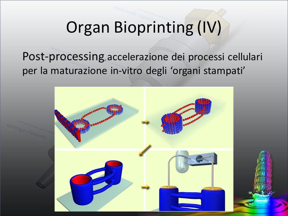 Post-processing, accelerazione dei processi cellulari per la maturazione in-vitro degli organi stampati Organ Bioprinting (IV)
