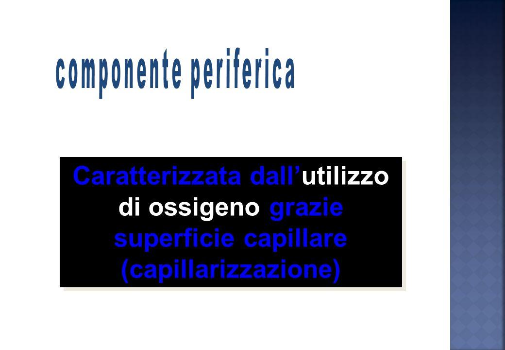 Valori di VO 2 max riscontrati nel campionato italiano (ml/kg/min)