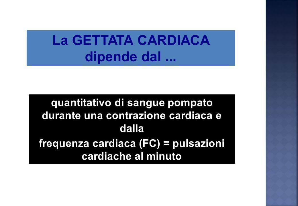 Caratterizzata dallutilizzo di ossigeno grazie superficie capillare (capillarizzazione)