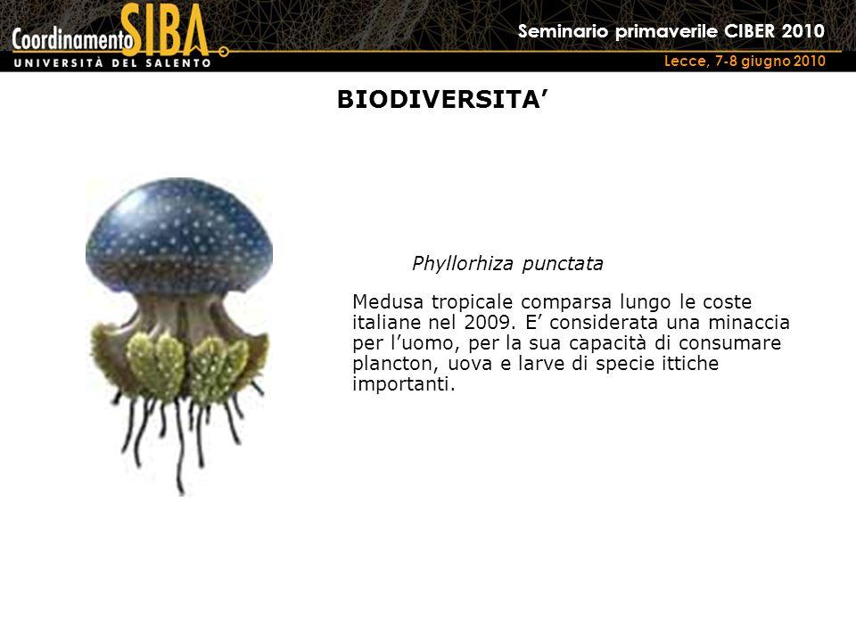 Seminario primaverile CIBER 2010 Lecce, 7-8 giugno 2010 Phyllorhiza punctata Medusa tropicale comparsa lungo le coste italiane nel 2009.