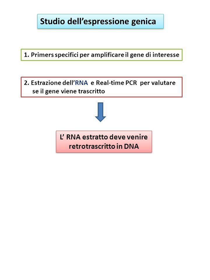 Studio dellespressione genica 1. Primers specifici per amplificare il gene di interesse 2. Estrazione dellRNA e Real-time PCR per valutare se il gene