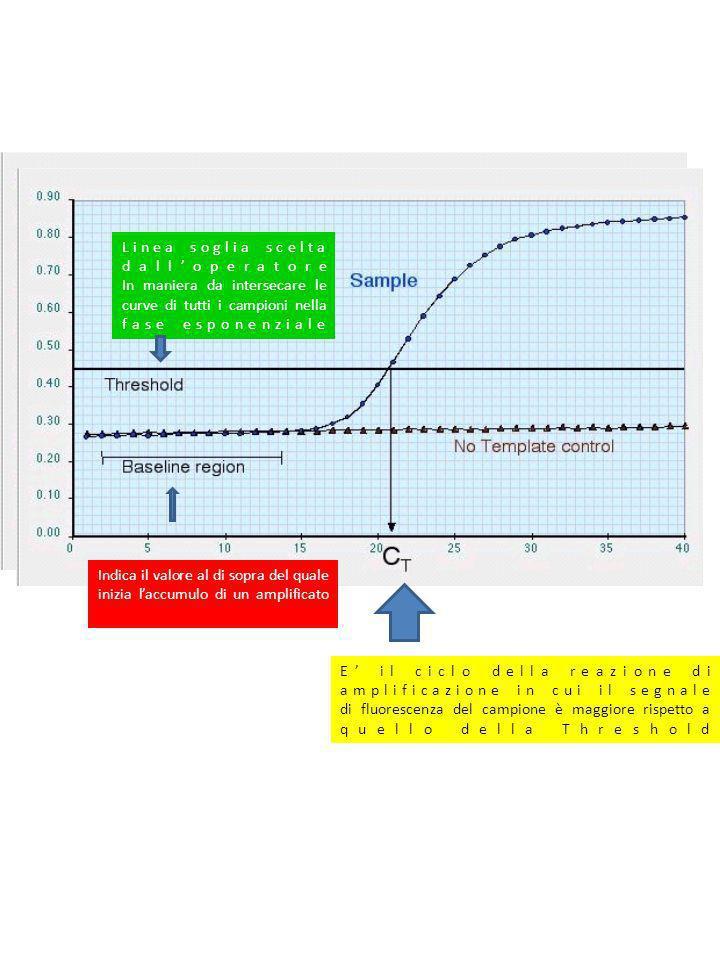 Linea soglia scelta dalloperatore In maniera da intersecare le curve di tutti i campioni nella fase esponenziale Indica il valore al di sopra del qual