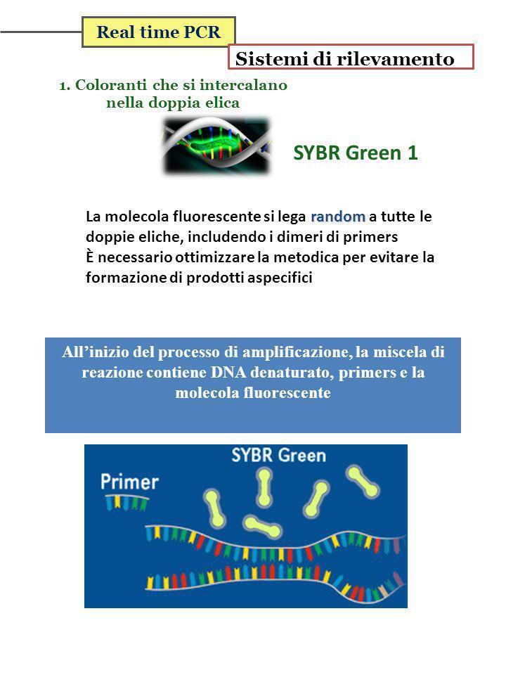 Real time PCR Sistemi di rilevamento 1. Coloranti che si intercalano nella doppia elica SYBR Green 1 Tm random La molecola fluorescente si lega random