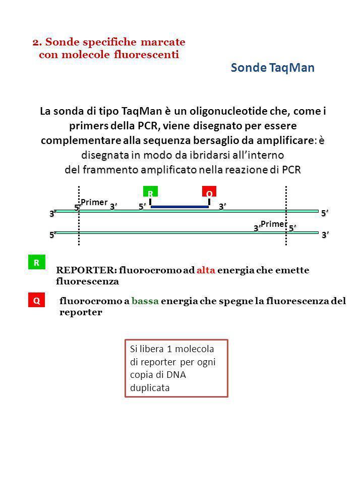 2. Sonde specifiche marcate con molecole fluorescenti Primer 3 3 3 3 5 5 5 5 RQQ53 Sonde TaqMan R REPORTER: fluorocromo ad alta energia che emette flu