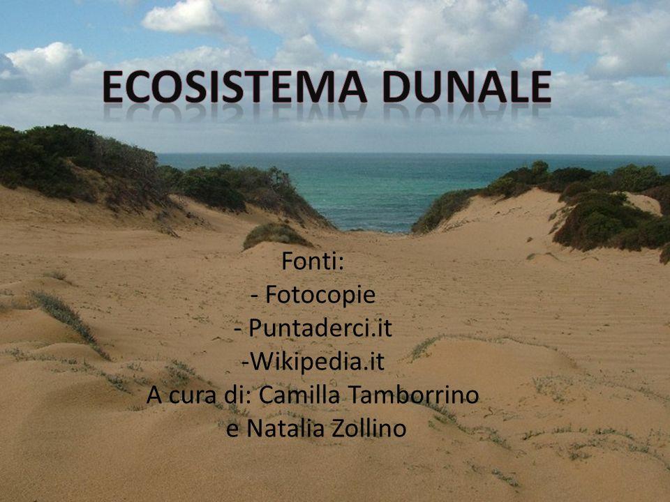 Fonti: - Fotocopie - Puntaderci.it -Wikipedia.it A cura di: Camilla Tamborrino e Natalia Zollino