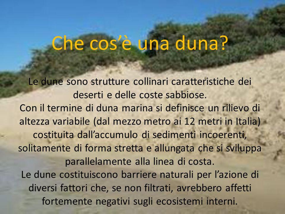 Che cosè una duna? Le dune sono strutture collinari caratteristiche dei deserti e delle coste sabbiose. Con il termine di duna marina si definisce un