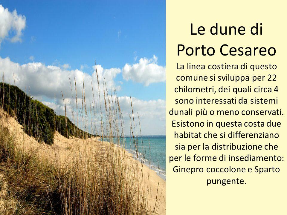 Le dune di Porto Cesareo La linea costiera di questo comune si sviluppa per 22 chilometri, dei quali circa 4 sono interessati da sistemi dunali più o