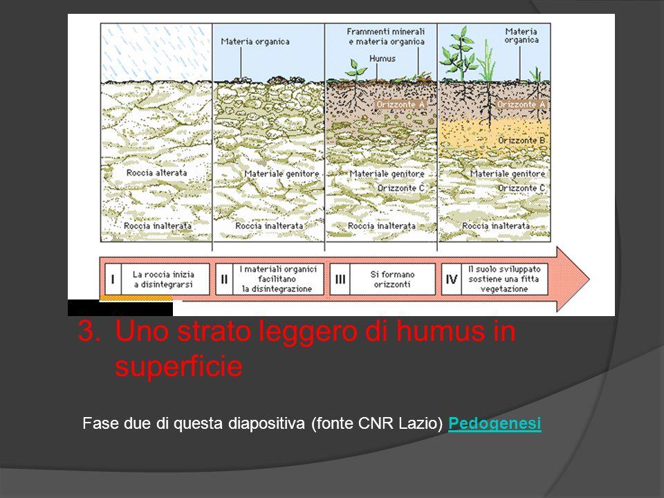 La morte di questi vegetali favorisce la creazione di un abbozzo di terriccio A questo punto troviamo i seguenti strati: 1.La roccia inalterata alla base 2.Roccia alterata al centro 3.Uno strato leggero di humus in superficie Fase due di questa diapositiva (fonte CNR Lazio) PedogenesiPedogenesi