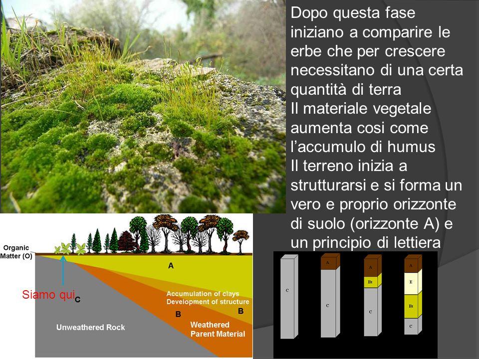 Dopo questa fase iniziano a comparire le erbe che per crescere necessitano di una certa quantità di terra Il materiale vegetale aumenta cosi come lacc