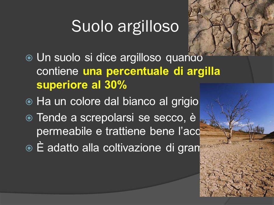 Suolo argilloso Un suolo si dice argilloso quando contiene una percentuale di argilla superiore al 30% Ha un colore dal bianco al grigio Tende a screpolarsi se secco, è poco permeabile e trattiene bene lacqua È adatto alla coltivazione di graminacee