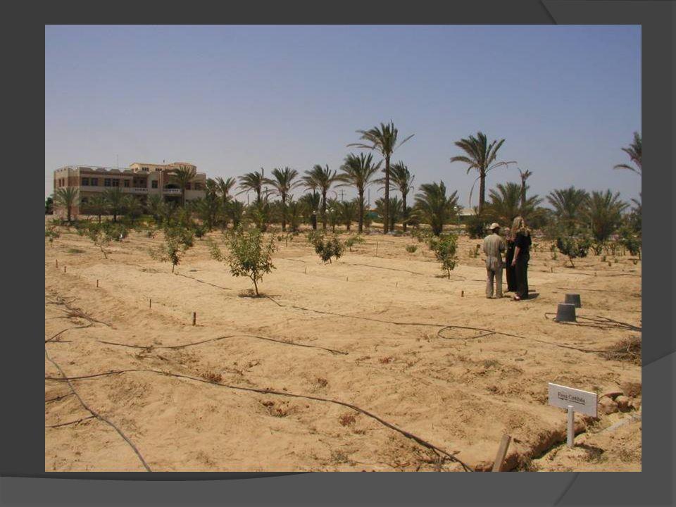 Terreno sabbioso Un terreno si dice sabbioso se la percentuale di sabbia supera il 65% Si tratta di un terreno molto permeabile e ricco di aria Ha il