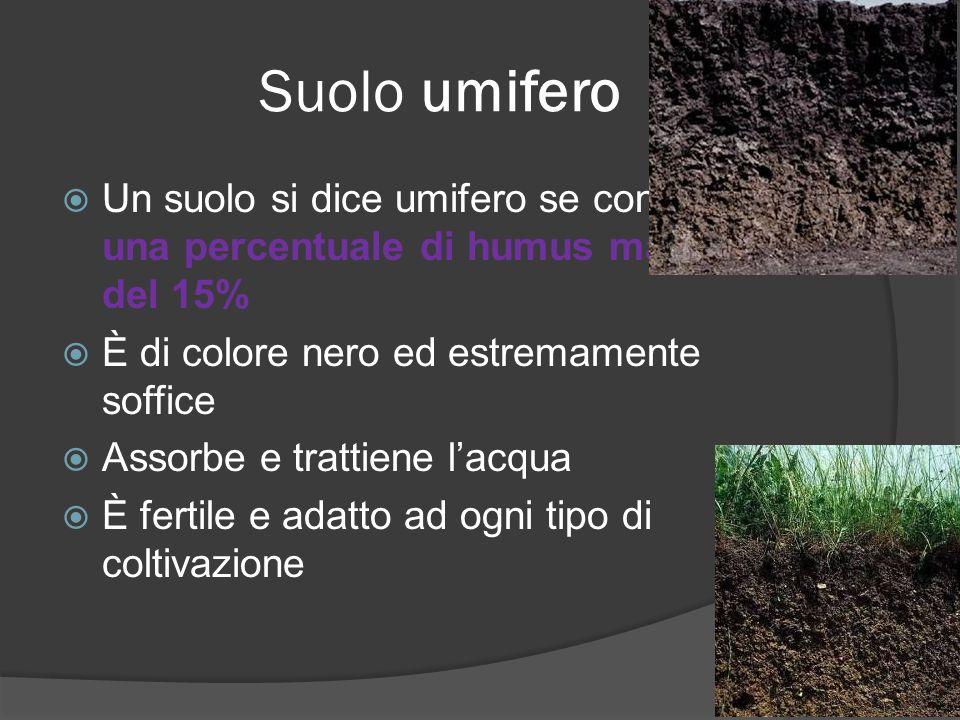 Suolo umifero Un suolo si dice umifero se contiene una percentuale di humus maggiore del 15% È di colore nero ed estremamente soffice Assorbe e tratti