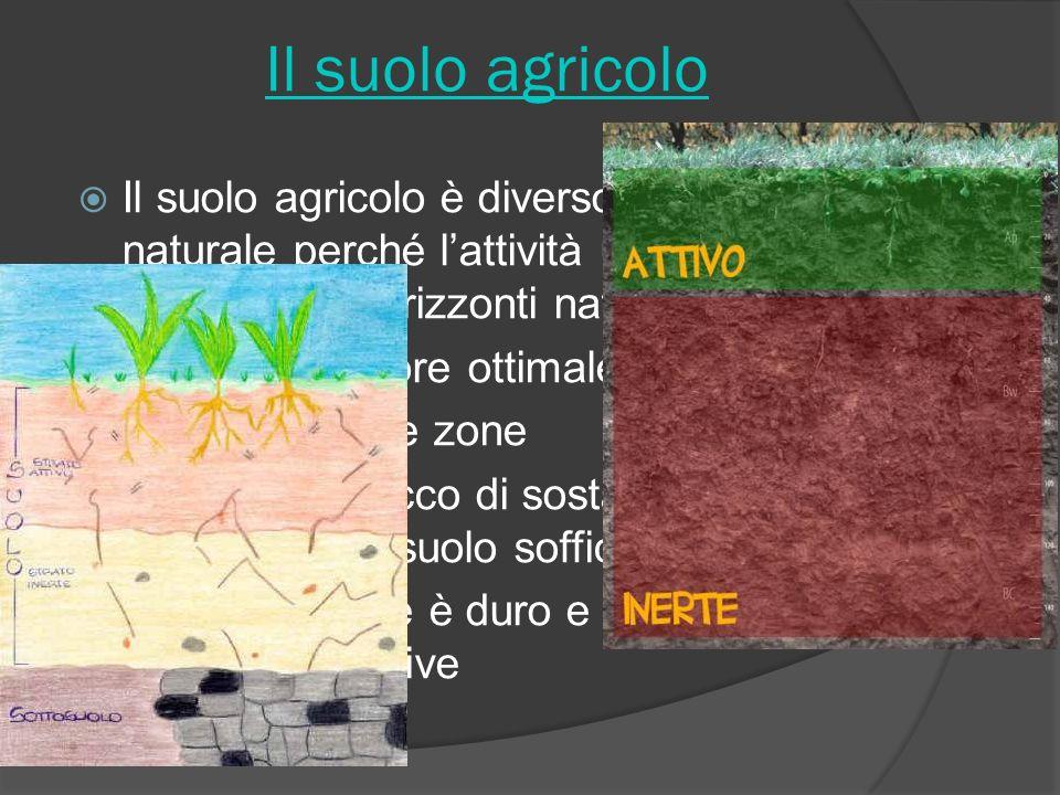 Il suolo agricolo Il suolo agricolo è diverso dal suolo naturale perché lattività umana ha sconvolto gli orizzonti naturali Ha uno spessore ottimale d