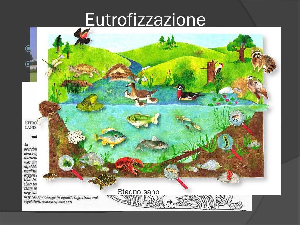 Eutrofizzazione Il prefisso eu – sta per buono Eutrofizzazione sta per buon nutrimento ma spesso questi termini non hanno niente di buono per le conse
