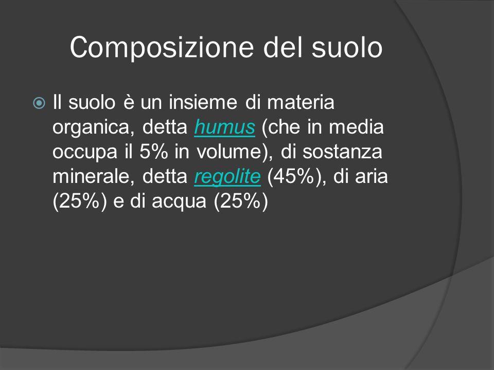 Composizione del suolo Il suolo è un insieme di materia organica, detta humus (che in media occupa il 5% in volume), di sostanza minerale, detta regolite (45%), di aria (25%) e di acqua (25%)