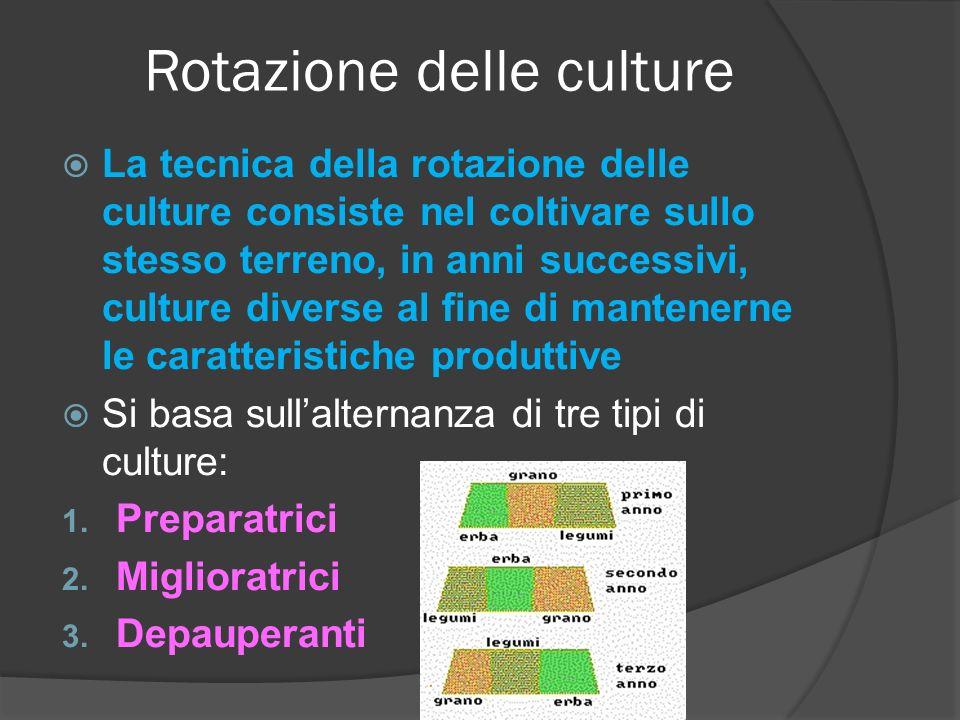 Rotazione delle culture La tecnica della rotazione delle culture consiste nel coltivare sullo stesso terreno, in anni successivi, culture diverse al fine di mantenerne le caratteristiche produttive Si basa sullalternanza di tre tipi di culture: 1.
