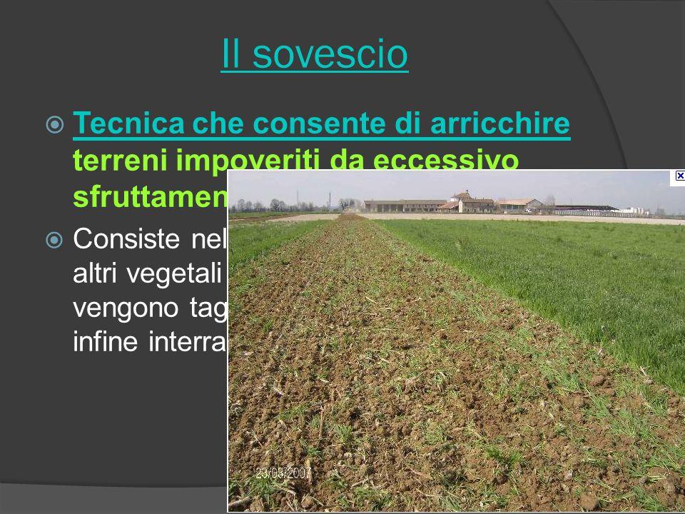 Il sovescio Tecnica che consente di arricchire terreni impoveriti da eccessivo sfruttamento Consiste nel coltivare leguminose ed altri vegetali che an