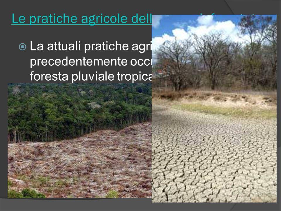 Le pratiche agricole delle zone deforestate La attuali pratiche agricole in zone precedentemente occupate dalla foresta pluviale tropicale stanno port