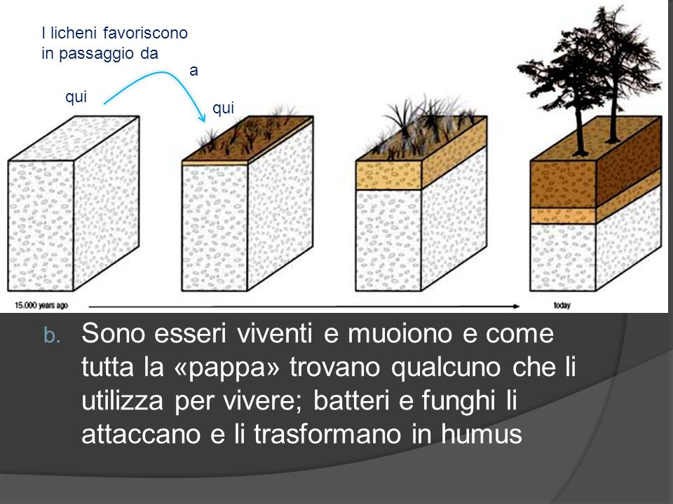 In questa prima il processo principale è quello di degradare la roccia e ridurla a frammenti più sottili (ciottoli e sabbia) Il ruolo dei licheni è duplice: a.
