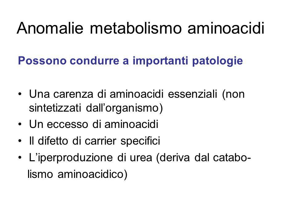 Anomalie metabolismo aminoacidi Possono condurre a importanti patologie Una carenza di aminoacidi essenziali (non sintetizzati dallorganismo) Un eccesso di aminoacidi Il difetto di carrier specifici Liperproduzione di urea (deriva dal catabo- lismo aminoacidico)